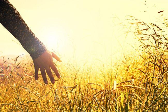 Achat de votre terrain : les étapes